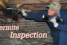 Control Pest Sydney / This board gives you detail and updated information about termite control services, so keep reading and make your house termite & pest free.