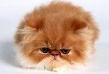 Squishy Kitties
