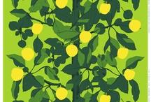 درخت لیمو