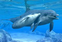 Delfín de amor