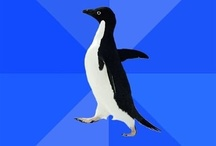 Meme - Socially Awkward Penguin / by Gaurav Sharma