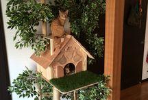 Кошачьи дома