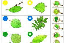 Stromy, kríky, huby