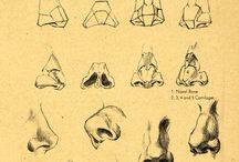 Estudios: nariz