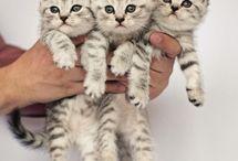 kis cicák
