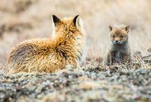Állat fotók