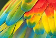 all the colours of the rainbow / by Lara Stanley