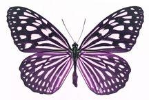 Butterfly / by Roxanne Jones