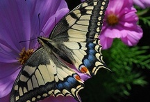 34- Butterflies  / by Katayoon Moghaddam- Soroush