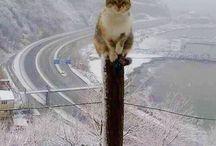 Funny Cats / Hilarious Cat Collection.  Igal Ben Yair Las Vegas Realtor Omniterra Solutions 818-448-0117 http://www.ivegasrealtor.com/
