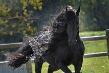 Satılık Atlar