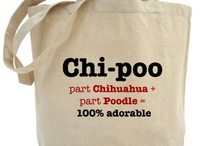 Chipoo Puppies