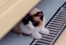 Catz / For the love of the living feline!