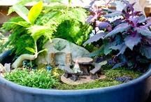 Fairy Gardens and Terrariums