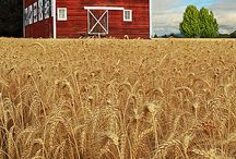 Design | American Barn