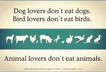 Animal lovers board