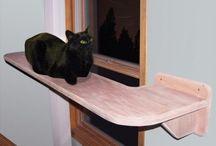 Cat / by Jessica Schrader