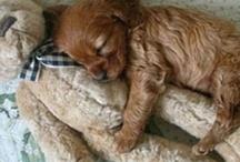 too cute / by Lori N Dennis