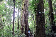 Monteverde Cloud Forest / Adventures at Monteverde Cloud Forest in Puntarenas, Costa Rica.