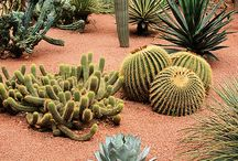 Cactus garden / Plans to have a cactus and succulent garden