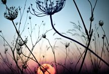 Silhouette in Nature