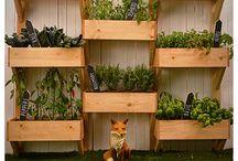 Garden/Backyard Ideas