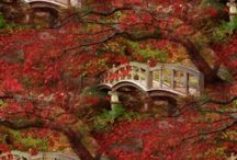 Autumn / by Lygea Robbins
