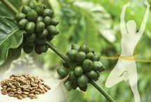 """News Naturali Dr. Giorgini / Articoli riguardanti le tematche del benessere naturale. Scopriamo assieme le proprietà delle diverse piante e i possibili """"aiutii naturali"""" contro diversi fastidi. http://www.drgiorgini.it/approfondimenti"""