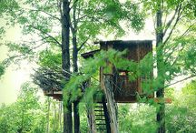 Jack And The Bean Stalk... / Ultra-natural, high-design treehouses from around the world...