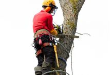 Seattle Tree Service / You can find us at http://www.seattlecitytreeservice.com.  Fill out the free estimate form while there and someone from our helpful team will get back to you promptly.