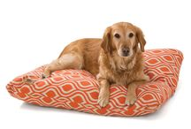 Summer 2014 New Products / New patterns and colors for our awesome Bumper Beds and Floppy toys plus all new West Paw Pillow Beds?! Awesome. / by West Paw Design