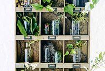 vintage style plants