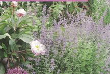 """Herbs magazine covers / """"Herbs"""" is the quarterly journal of the Herb Society."""