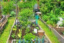 Carolina wants a Resta Garden
