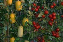 Reena Gardening