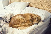 doggies / by Debbie Green {Green Nest Decor}