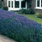 Outdoors / Ideas to spruce up our curb appeal.