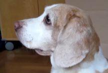 Beagle Orr-lyuk (Beagle nOstril) / Beagle Orr-lyuk (Beagle nOstril) videó - Premier beharangozó: http://youtu.be/ZHiULhQ402Q