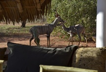 TSAVO MASHARIKI CAMP / Nice B&B facing Tsavo East National Park - KENYA -