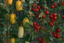 Κήπος Με Λαχανικά / Vertical gardens