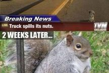 Squirrels  / Who run the world?