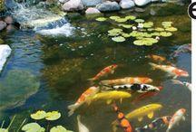 Goldfish & Koi Ponds:)