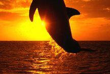 RITASAUCISSE / à la gloire des dauphins, des chatons, des poneys et de mamie Rita♥ATTENTION SECOND DEGRÉS INSIDE*