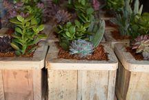 Succulent Woden Box