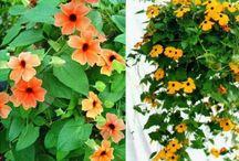 Выращивание растений / the cultivation of plants