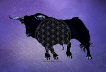 TORO -  BULL -  STIER / my own artwork for NO Bullfight SAVE THE BULLS  Toro from 2004 get loosed 2008 Design of my Toro 2013  enjoy
