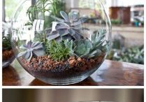 terrariums cacti and succulents