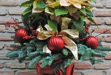 Flores y Plantas de Navidad