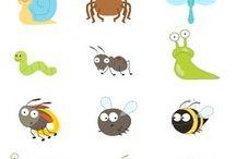 brouci, hmyz
