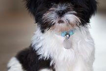 Fluffy and friggin cute / by Dana Barlow